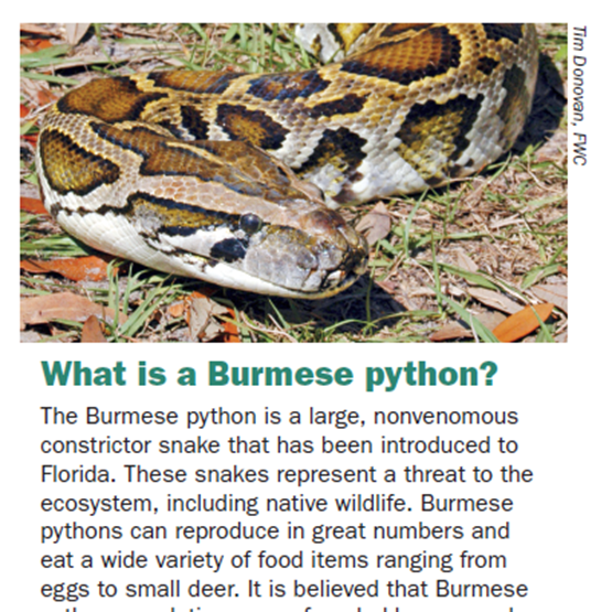 Picture of Python Brochure Image